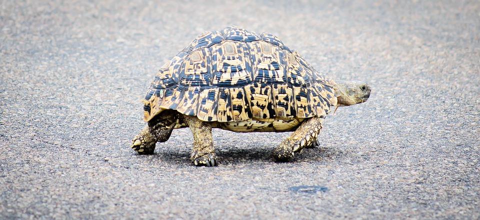 Citaten En Wijsheden Over Tijd : Schildpadden kunnen meer over de weg vertellen dan hazen